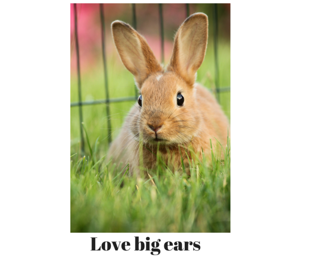 Love big ears